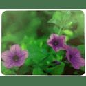 Коврик для мышки Buro BU-M20012 Цветы